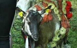 goat1_3348986b